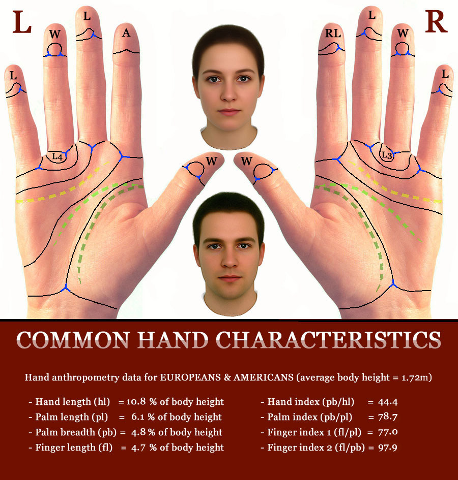 Common hand characteristics: anthropometry, biometry, fingerprints, palmar dermatoglyphic & major hand lines.